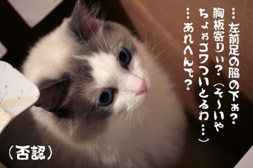 Img_492402