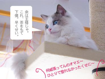 Oosama_kuku